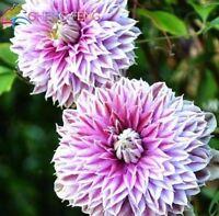 USA-Seller 50pcs/lot Mix Beautiful Clematis Seeds Bonsai Flower Seeds