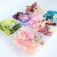 Assroetd Real Dried Flowers Pressed Leaves For Epoxys Resins Jewelry Making