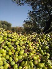 Olio extravergine di oliva biologico nuova molitura 2019-2020 litri 5