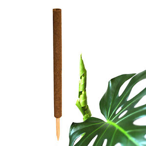 Pflanzstab Kokos Stab für Pflanzen Monstera Rankhilfe Rankstab Kletterhilfe 80cm