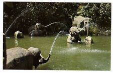 1960s DISNEYLAND ADVENTURELAND JUNGLE CRUISE ELEPHANT BATHING POOL~NMMT POSTCARD