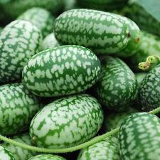 20pc Rare Cucamelon Seeds Mini Watermelon Fruit Home Yard Garden Plant Vegetable