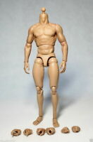 ZC Toys 12inch Muscular Male Action Figure Body Fit 1:6 Hot Toys Head Sculpt