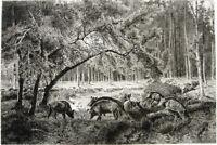 WILD BOARS PIGS FOREST WOODS ~ 1886 Original Peter Moran Art Print Etching RARE!