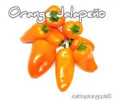 (25+) Orange Jalapeno Pepper Seeds