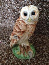 Border Fine Arts Owl For Sale Ebay