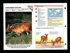 Four Horned Antelope Wildlife Fact File Mammal Animal Card Home School Study