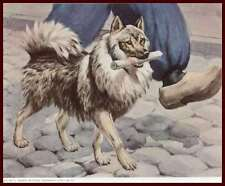 Keeshond Dog Carries the Paper, Vintage Print, Matted 1958