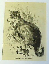 1883 magazine engraving~ PUSS CARRYING HER YOUNG KITTEN