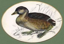 Künstlerische Aquarelle (ab 1945) mit Vogel-Tierart