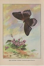 """1917 Vintage BUTTERFLIES """"RED SPOTTED PURPLE"""" BUTTERFLY COLOR Art Lithograph"""