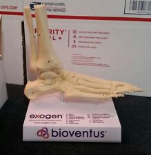Exogen Ultrasound Bone Healing System  Bioventus Plastic Skeleton Foot Display