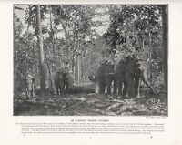 1897 Vittoriano Stampa ~Colombo~ Elefante Tandem Forti ( Testo