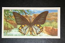Birdwing Butterfly  Vintage Colour Card # VGC
