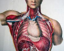 Vintage Human Anatomy And Medical Surgery Illustration 8x10 Canvas Art Print New