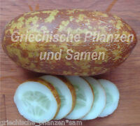 🔥 🥒 Poona Kheera Gurke aus Indien 5 frische Samen knackige Salat-Gurken