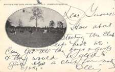Spring Valley New York Cow Pasture Antique Postcard K82536