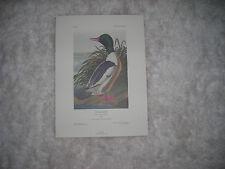 Birds of America Print Goosander 1986 74/500 by John J. Audubon F,R,S, F,L,S,