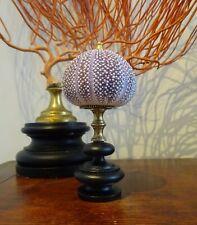 Cabinet de Curiosités Oursin mer du nord  violet sur socle ancien XIXème