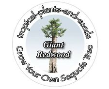 Grow Your Own Largest Tree In The World Kit - GIANT REDWOOD - Sequoia Bonsai