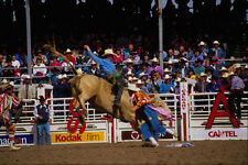 585076 Bull Ride In Fine Style A4 Photo Print