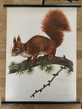 Eichhörnchen Rollkarte Schulwandkarte 50 cm x 70 cm