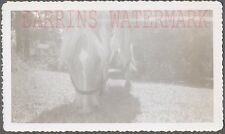Unusual Vintage Photo Horse Eating Shadows 733783
