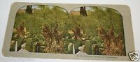 Vintage Antique Rare 1900's Beautiful Garden Of Gethsemane Photo Stereoview VHTF