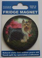 Yorkshire Terrier - Dog - Fridge Magnet - Welsh Slate
