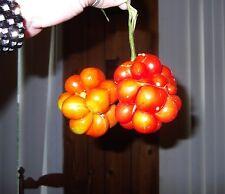 Very Rare Heirloom! Traveler's Tomato 20 Seeds! PULL APART & EAT LIKE GRAPES!