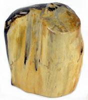 Versteinertes / fossiles Holz, Maße ca. 30 x 27 x 19cm & 22,1 kg