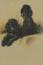 Black Poodle Dogs by Lucy Dawson 1946 New Blank Note Cards