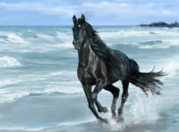 LMOP747 hand painted animal horse runing by the sea art oil painting on canvas