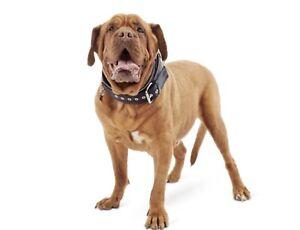 Good2Go Dog Collar for Big Dogs XL XXL XXXL  (J)