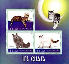 Madagascar 2016 Mnh Cats Balinese Ocicat Nebelung 3v M/S Pets Stamps