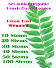Sri lanka  100% Organic Dried Curry Leaves 100 Stems Free Shipping (KARAPUNCHA)