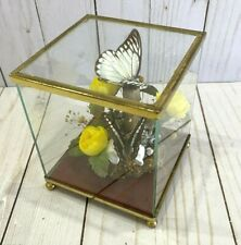 Vintage TAXIDERMY REAL BUTTERFLY GLASS DISPLAY Albert E Price Products