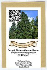 Sequoiadendron giganteum - Riesenmammutbaum (30 Samen)