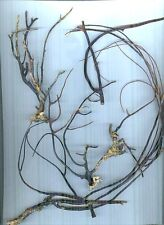 #2 All Natural Florida Black Coral - Jewelry & Art
