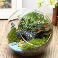 Round Globe Ball Glass Hanging Plant Terrarium Flower Vase Pot Wedding Decor New