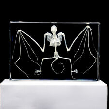 Real Bat Animal skeleton Specimen Science Classroom Teacher Education Taxidermy