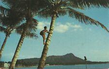 OLD VINTAGE ISLAND BOY CLIMBING COCONUT TREE AT WAIKIKI BEACH HAWAII POSTCARD