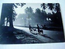 PITTORESQUE OLD REAL PHOTO-PC: INDONESIA~NEAR WELTEVREDEN~ANIMATED~GOATS~ca 1930