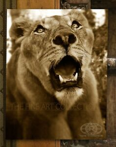 """""""Spirit of The Lioness"""" Female Lion - FINE ART Print by Troy Robertson"""