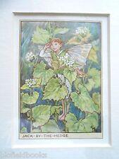 Cicely Mary Barker-Jack Por el seto Flor Impresión De Hadas Vintage montado