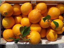 arance di sicilia tarocco 27 kg IDEA REGALO naturali zero pesticidi agrumi