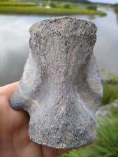 Vertebrae Fossils, Deep South Mammal Fossil Vertebrae