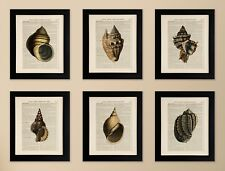 SET OF 6 ART PRINTS ON OLD ANTIQUE BOOK PAGE, Sea Shells, Bathroom Wall Art