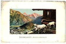 CPA Suisse Mitteland Interlaken chèvres