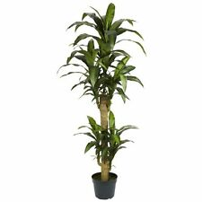 Nearly Natural 6100 Yucca Decorative Silk Plant- 5-Feet- Green NEW